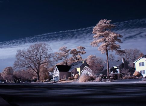 Big Pines in Infrared by Enkphoto
