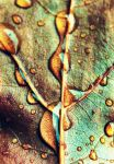 Drops of Fall by musicity