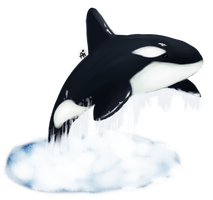 Free Willy! by aiMikash