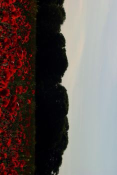 Poppies in the foreground.. by CharlieCreighton