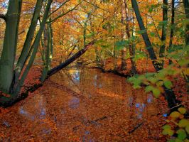 Beauty of autumn 4 by pagan-live-style