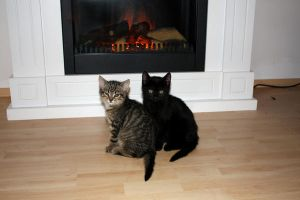 fireplace with cats - stock. by ramona-stock