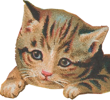 Loveable Kitten (stock, transparent) by linux-rules