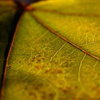 vein of nature by piink-chamallow