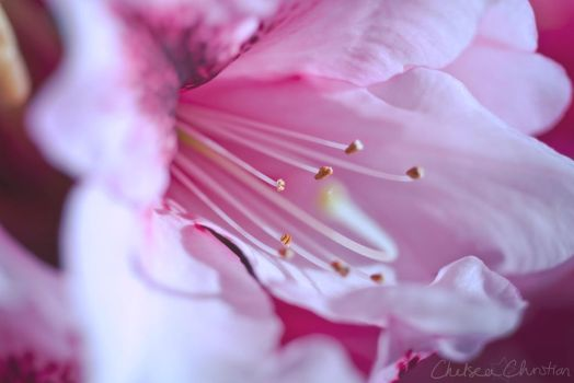 Inflorescence 3 by MordsithCara