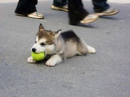 puppy with ball by TouchedbyLavender