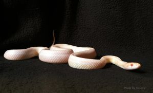 Snake - 1 by AivisV