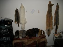 Fur Collection 10/18/12 by WolfHaunt