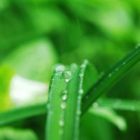 Green lover by BlueColoursOfNature