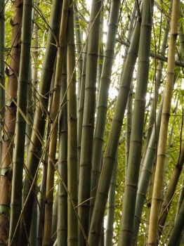 bamboo by steffkhoo