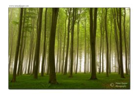 Morning forest by tomaskaspar