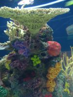 Coral Reef 2 by SerendipityStock