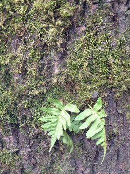 Moss and Ferns on Tree by mountainliongrl