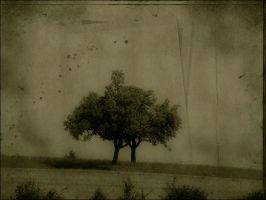 The lonely tree... by bindii
