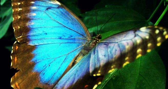 Blue Butterfly by flamingpig