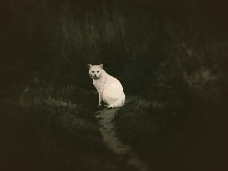 white cat by Iridescent-happinesS