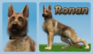 My participant for Silver Wolf's contest - Ronan by ShinRanLove4ever