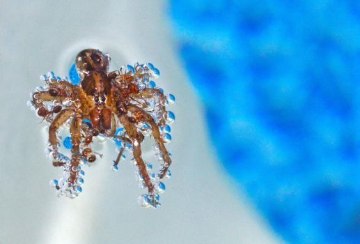 Under Water Refractions on Spider by FallOut99