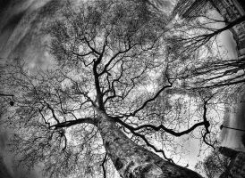 Veins in the sky by bubus666