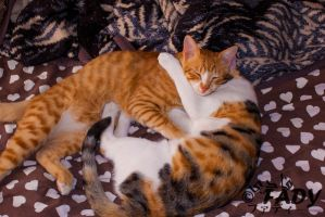 Two lovers by Raneem90