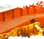 Life of Pi GIF by Caitybee