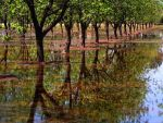 The Pecan Orchard by SharPhotography