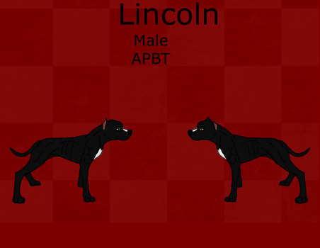 Lincoln Reference Sheet by Pit-Fall
