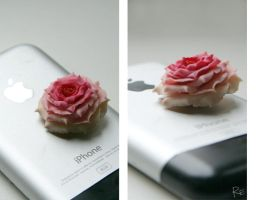 fimo rose by RE-main