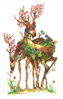 Deer by galazy
