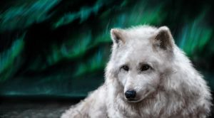 Arctic Wolf by InDeepBlue