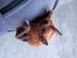 Eastern pipistrelle bat brooch by creturfetur