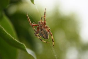 The Web by Adrant