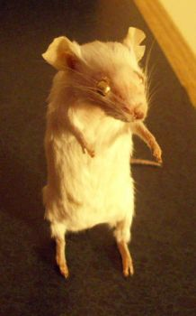 mouse taxidermy 2 by pandasnacks