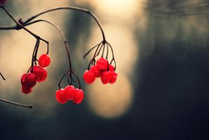 Berries by UnseenTiger