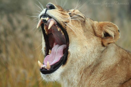 Lion Mouth Inspection I by darkcalypso