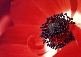 red flower by cloe-patra