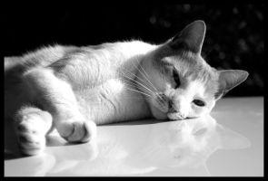 Le Chat... by GretheFenyx