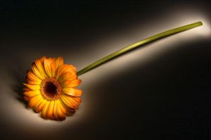Painted Flower by 3hanphoto