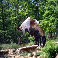 vulture VII by mimose-stock