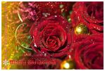 Rosy Christmas CARD by Lilyas