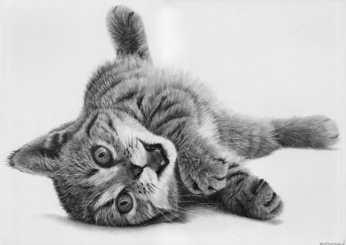 cat by Bengtern