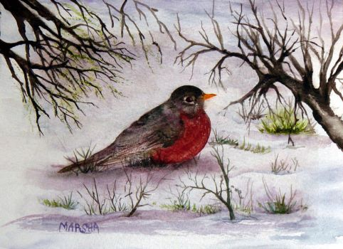 Early Spring Robin by aladyx