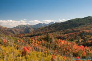 Autumn Scenery by Moohoodles