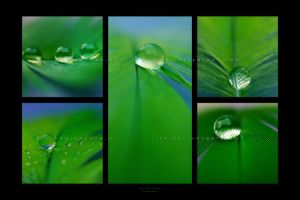:: Drops of green :: by Liek