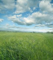 UNRESTRICTED - Sunny Field Premade by frozenstocks