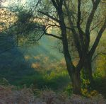 Morning sunrays I by starykocur