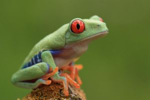Frog on the lookout by AngiWallace