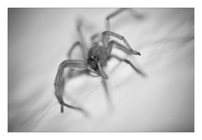 Phear the spider by Gurusmurf