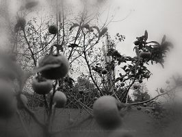 time machine -  the last fruits... by bindii