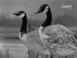 Canadian Geese by dangaranart